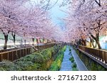 cherry blossoms at night  busan ... | Shutterstock . vector #271671203
