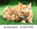 Red Cat And Rabbit On Green...