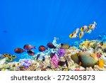 wonderful and beautiful... | Shutterstock . vector #272405873