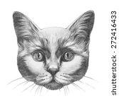 original drawing of cat.... | Shutterstock . vector #272416433