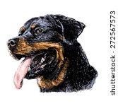 image of rottweiler hand drawn... | Shutterstock .eps vector #272567573