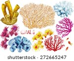 watercolor hand drawn corals on ... | Shutterstock . vector #272665247