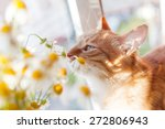 The Red Cat Smells A Bouquet O...