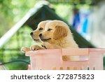 pet | Shutterstock . vector #272875823