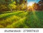sunlight in green coniferous