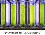 photobioreactor in lab algae... | Shutterstock . vector #273190847
