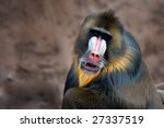 Close Up Of A Colorful Mandril...