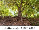 forest  environmental... | Shutterstock . vector #273517823
