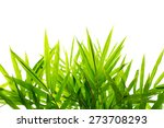 green bamboo leaf background | Shutterstock . vector #273708293