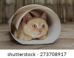 Stock photo red kitten sitting in a tube of white cardboard 273708917