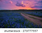 Bluebonnets In The Texas Hill...