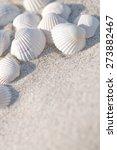 White Seashells On The Sand