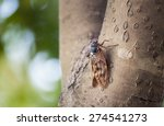 cicada on tree in summer | Shutterstock . vector #274541273
