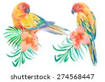 tropical birds isolated on... | Shutterstock .eps vector #274568447