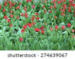 red tulips in garden  close up   Shutterstock . vector #274639067