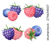 vector watercolor wild berry... | Shutterstock .eps vector #274654037