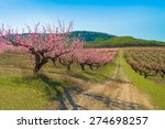 Spring Rosy Blooming Peach...
