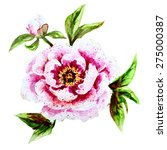 painted watercolor peony flower ... | Shutterstock . vector #275000387