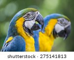 Colourful Parrot Bird