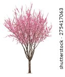 entire flowering sacura tree... | Shutterstock . vector #275417063