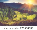 Mountain Forest Landscape Unde...