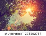 vintage frame from trees at... | Shutterstock . vector #275602757