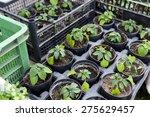 Plant Seedlings Ready For...