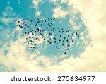 Birds On Sky   Growth Concept