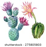Watercolor Cactus Set Isolated...