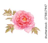 pink peony isolated. watercolor ... | Shutterstock . vector #275817947