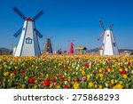 Colorful Tulips In The Park An...