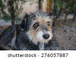 poor dog in cappadocia | Shutterstock . vector #276057887