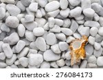 White Stone With Seashells....