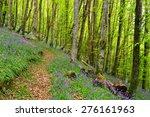 beautiful bluebell woods near...