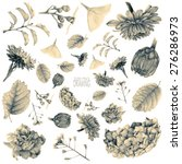 set of different spring flowers ...   Shutterstock . vector #276286973
