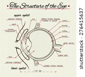 Vector Drawing Of The Structur...