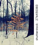 Small photo of Lone American Beech Tree in Winter Photo taken at Miami Whitewater Forest, a Great Park of Cincinnati and Hamilton County.