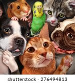 Stock photo pet group concept as dogs cats a hamster and budgie gathered together as a symbol for veterinary 276494813