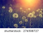 dandelion wild flowers in sunset | Shutterstock . vector #276508727