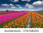 Tulip Farm Near The Rutten Tow...