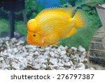 Image Of A Beautiful Aquarium...