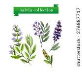 vector set of watercolor salvia ...   Shutterstock .eps vector #276887717