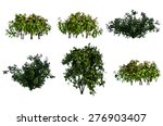 Plant Isolated Collection