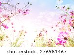 cosmos flowers with bokeh soft... | Shutterstock . vector #276981467