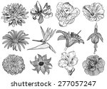 Vector Illustration Of Flowers...