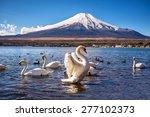 White Swan Flap Wings In...