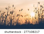 abstract of grass flower in... | Shutterstock . vector #277108217