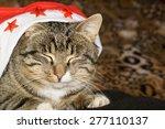 Portrait Of Cute Tabby Cat...