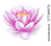 beautiful pink water lily or... | Shutterstock .eps vector #277189073