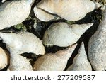 empty cochlea are laying in an...   Shutterstock . vector #277209587